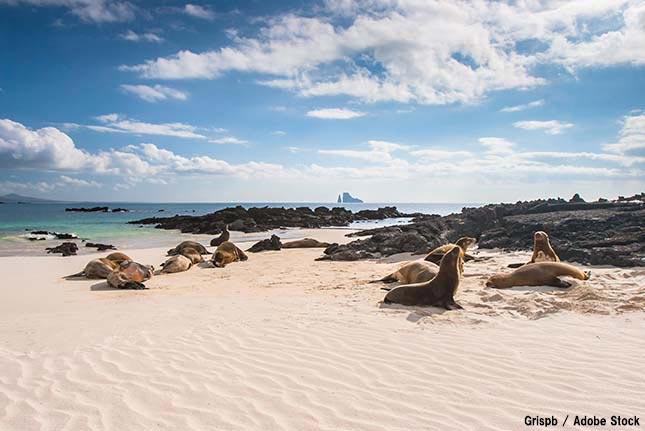 ガラパゴス諸島とは?自然に溢れる世界遺産は危機的状況だった!