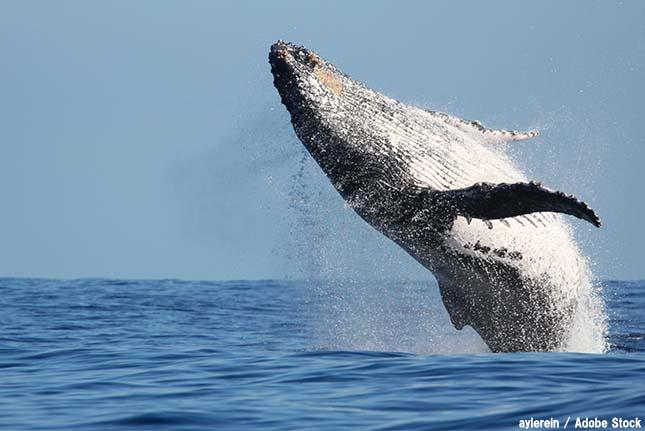 なぜかジャングルでクジラを発見!アマゾンで起こったミステリー