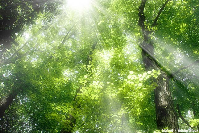 森林が温暖化の原因に?木から温室効果ガスのメタンが放出される
