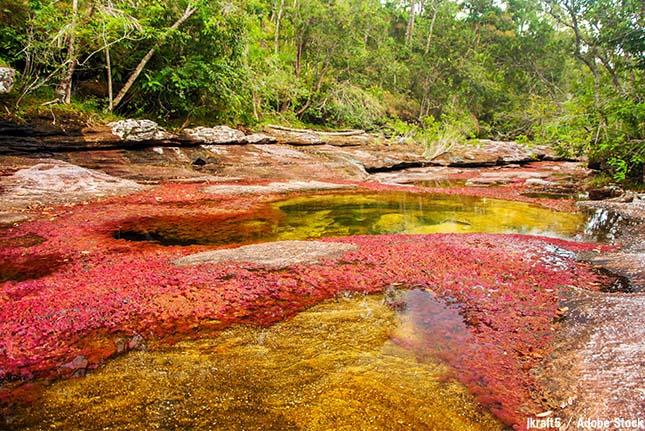 世界一美しい川?コロンビアの幻想的な川「キャノ・クリスタレス」