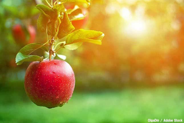 自然と共存!生態系サービスの機能と恩恵