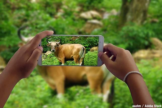 写真はストレス!動物たちにとって自撮りは迷惑な上に危険な場合も