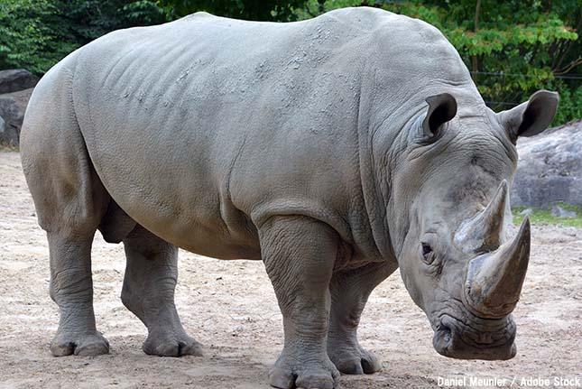 キタシロサイと世界遺産ガランバ国立公園とは【絶滅動物シリーズ】