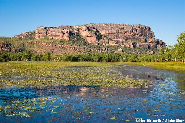 壁画で有名な世界遺産「カカドゥ国立公園」が危機遺産になった理由