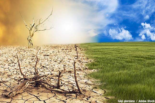 砂漠化を止めるのはシロアリ?害虫により荒れた地を緑化する方法とは