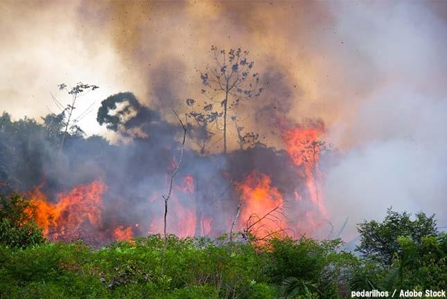 アマゾン大火災の原因は?熱帯雨林が失われ温暖化促進の恐れ