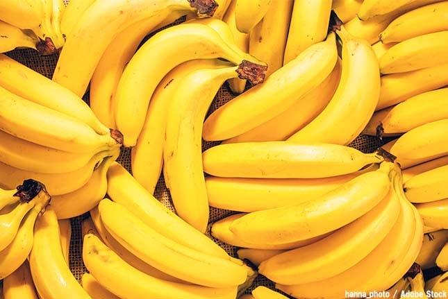 バナナが食べられなくなる?病気で絶滅が噂されている!
