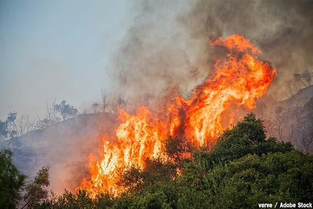 インドネシアの森林火災の原因は?大気汚染も大きな問題に!