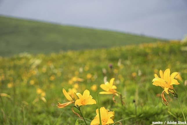 霧ヶ峰のおすすめ観光スポット「車山高原」