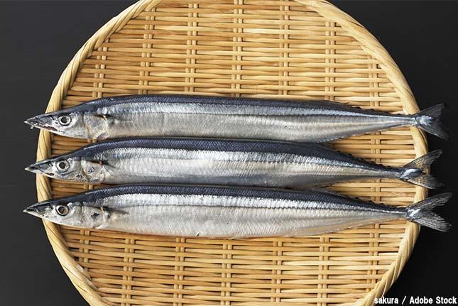 サンマの不漁で食べられなくなるかも?原因は温暖化と乱獲か