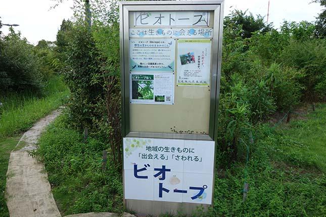 さいたま市で生き物や生態系を学べる!桜環境センターをご紹介