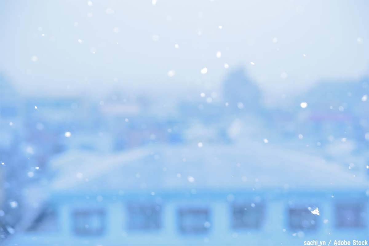 雪虫が大量発生!北海道の景色を真っ白にした原因は温暖化?