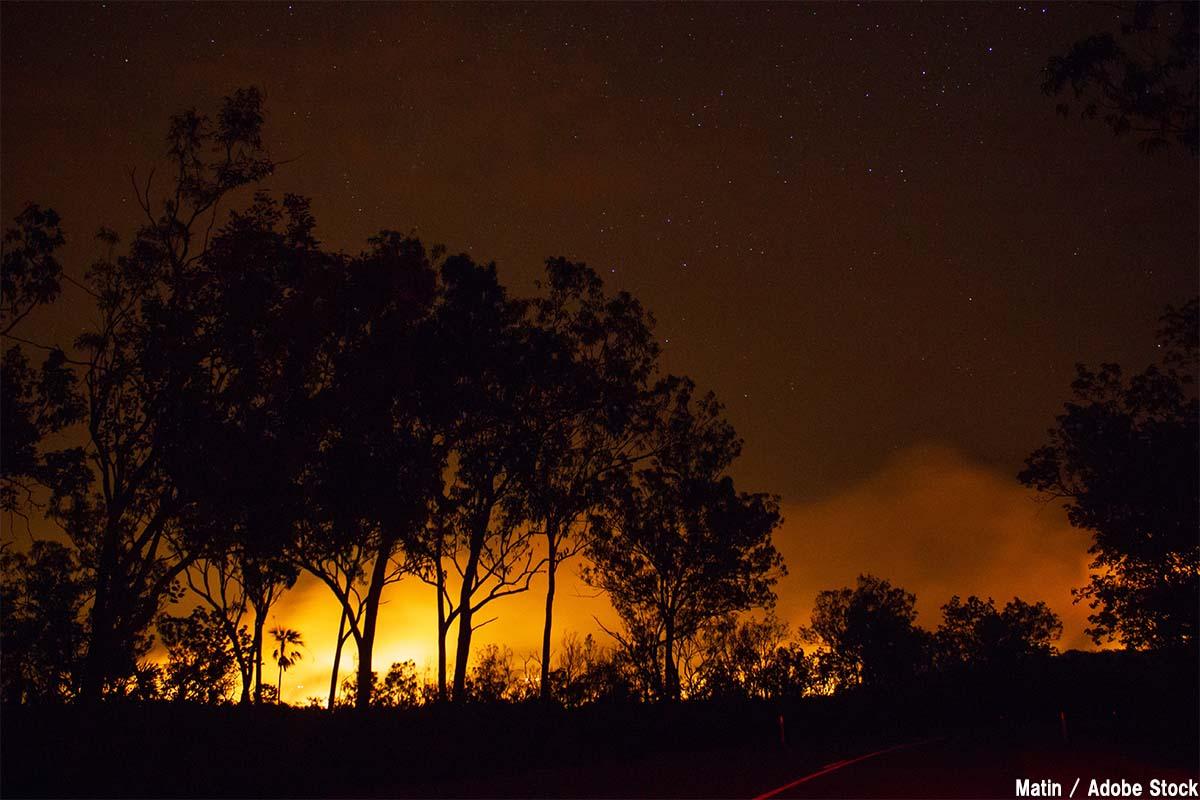 オーストラリアの山火事でコアラも大惨事!原因は何だったのか