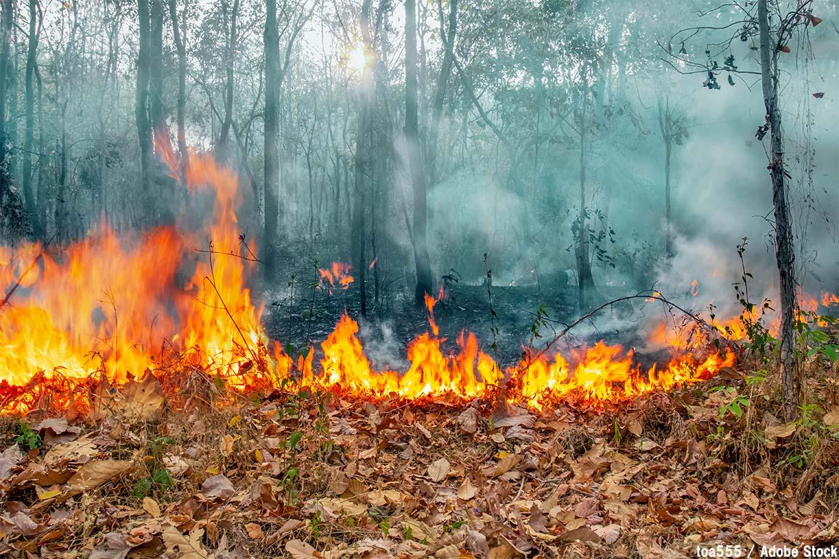 火災 オーストラリア 原因 森林