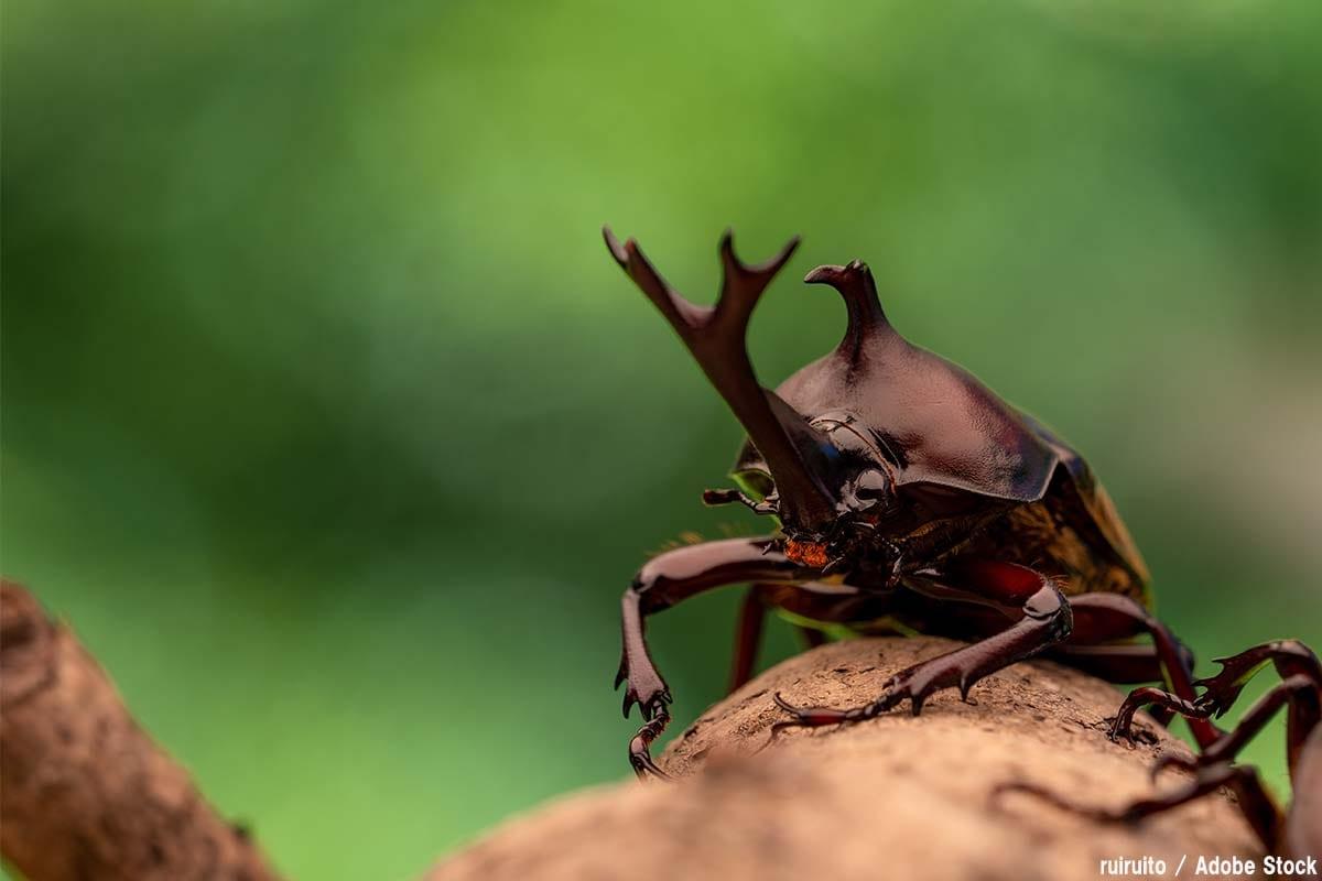 最強の虫は誰だ!恐ろしい能力を持つ昆虫10選をご紹介