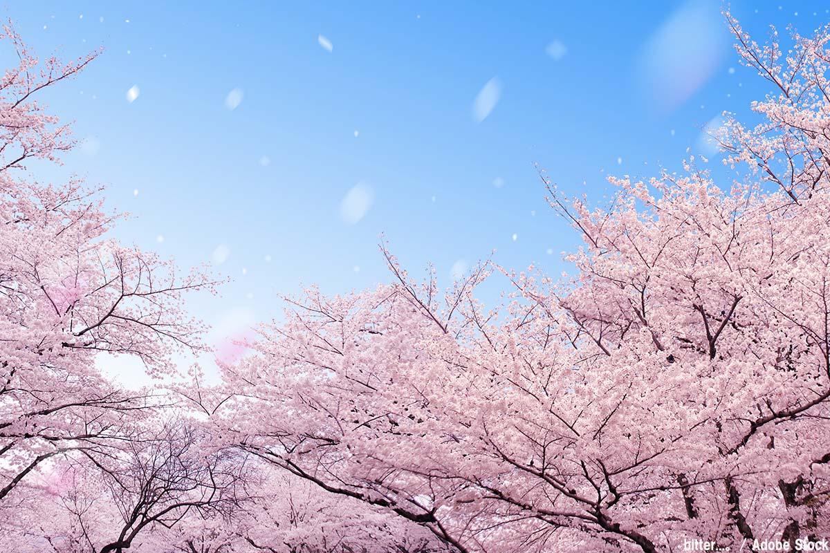 今年のお花見はどこに行く?桜の名所「日本五大桜」をご紹介!