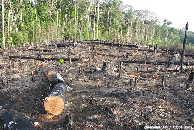 熱帯林・熱帯雨林がなくなる?森林減少の原因と対策とは