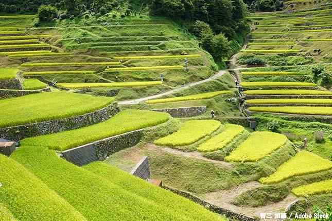 棚田のメリットとは?伝統的な農業に学ぶ持続可能な生活