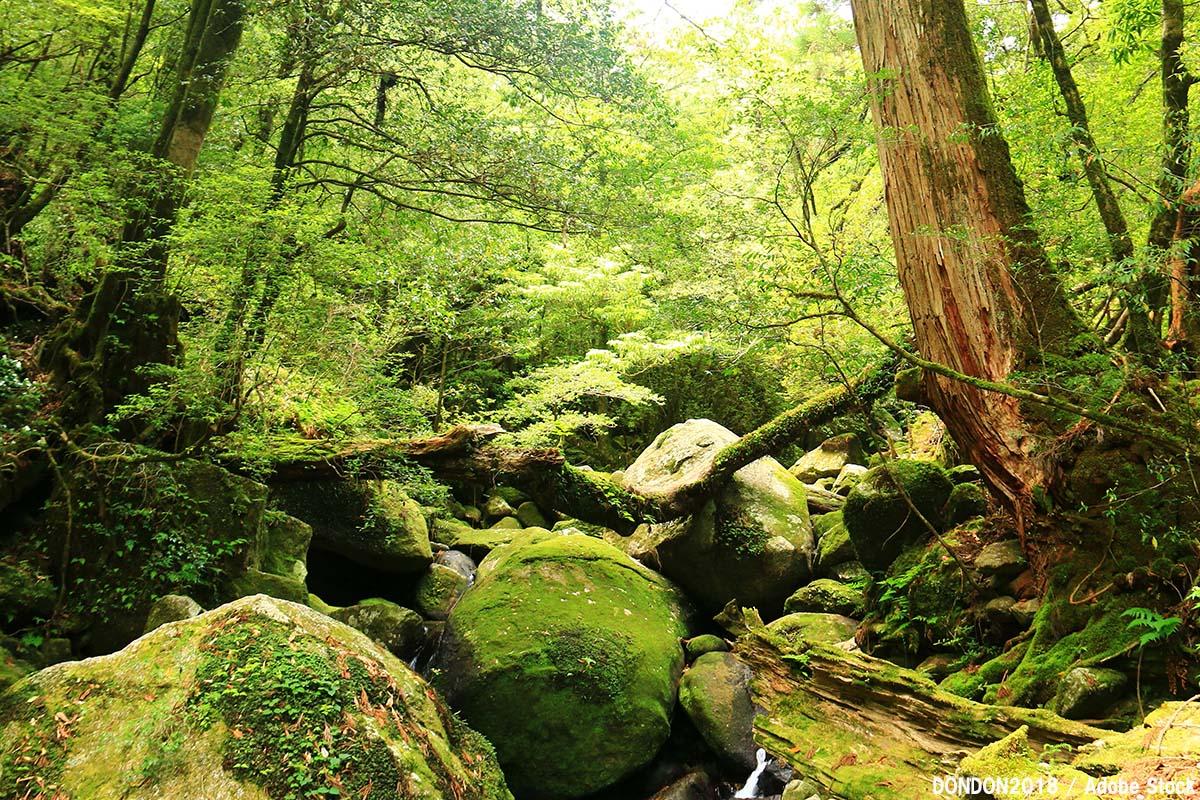 屋久島の世界遺産登録の理由とは?高樹齢の杉や珍しい動物たち