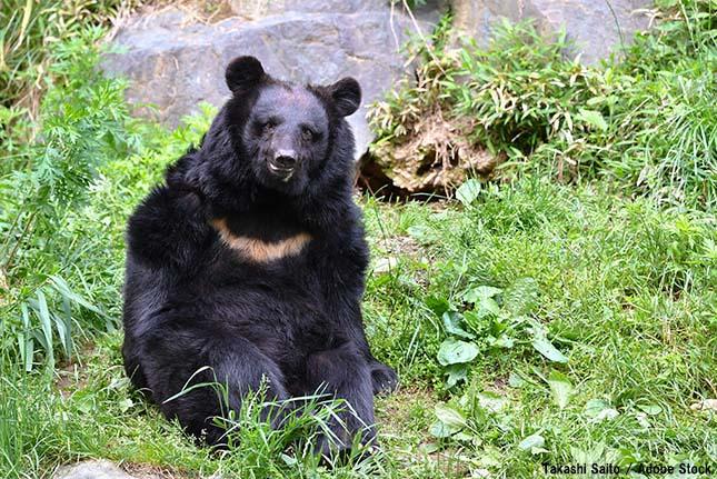 減少する生物多様性とは?種の絶滅は何が原因か
