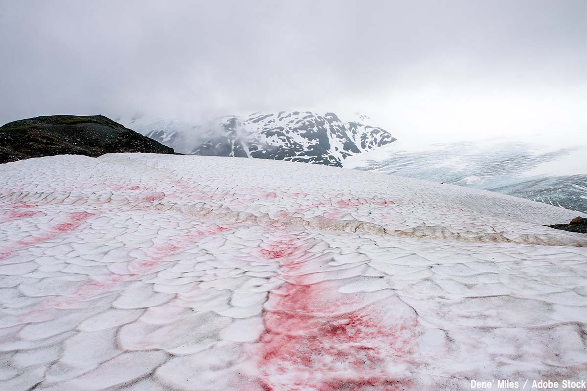【驚愕】南極の雪を変色させる氷雪藻とは?原因は温暖化か