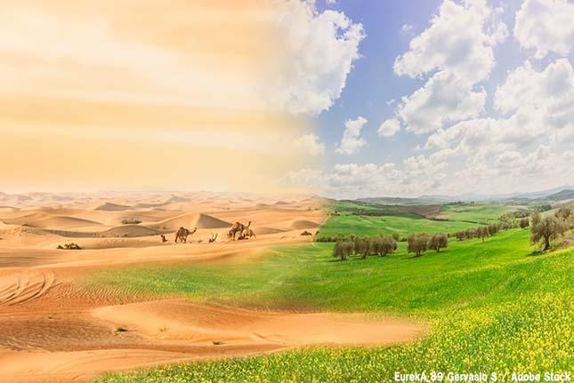 砂漠化を防止!国際的な取り組みから日本の取り組みまで