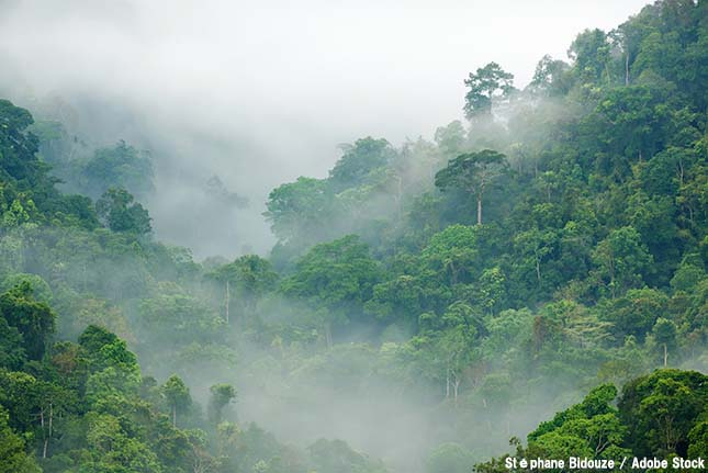 なぜ雲が多いのか?熱帯雨林のスコールの仕組み