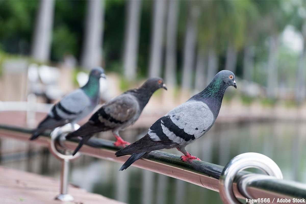 鳥の糞を対策するには?意外な危険性や適切な掃除方法