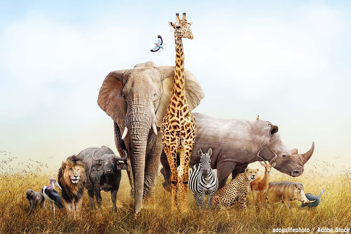 最強の動物は誰だ!驚異的な強さを持つ動物10選をご紹介