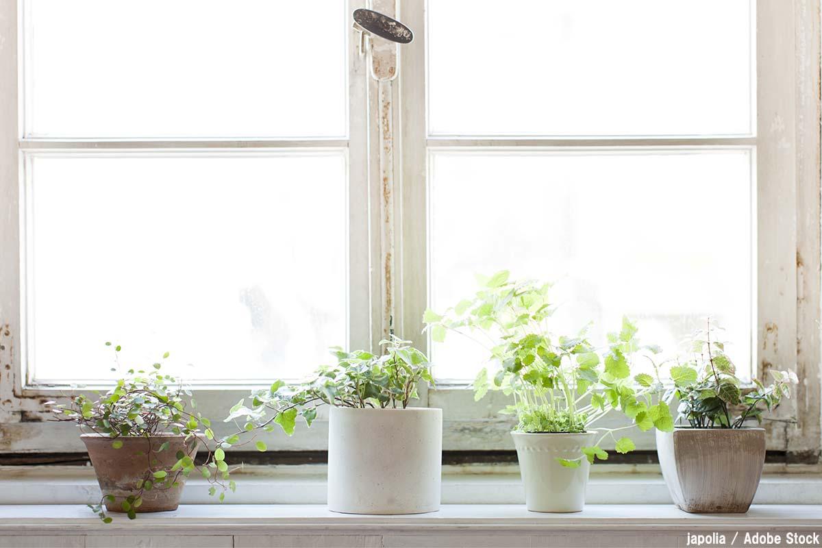 観葉植物の効果とは?抗菌やストレス対策などメリットまとめ