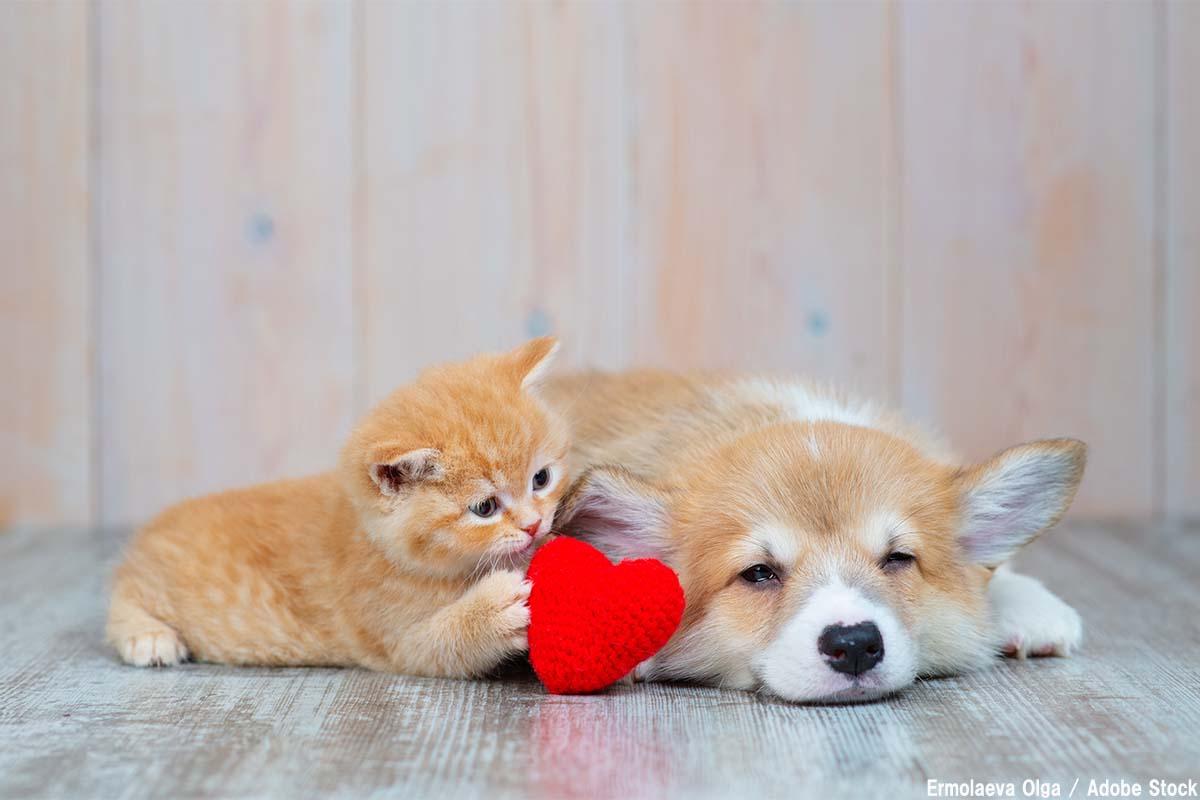 動物愛護週間は9月20日~26日!イベントや環境省の取り組み