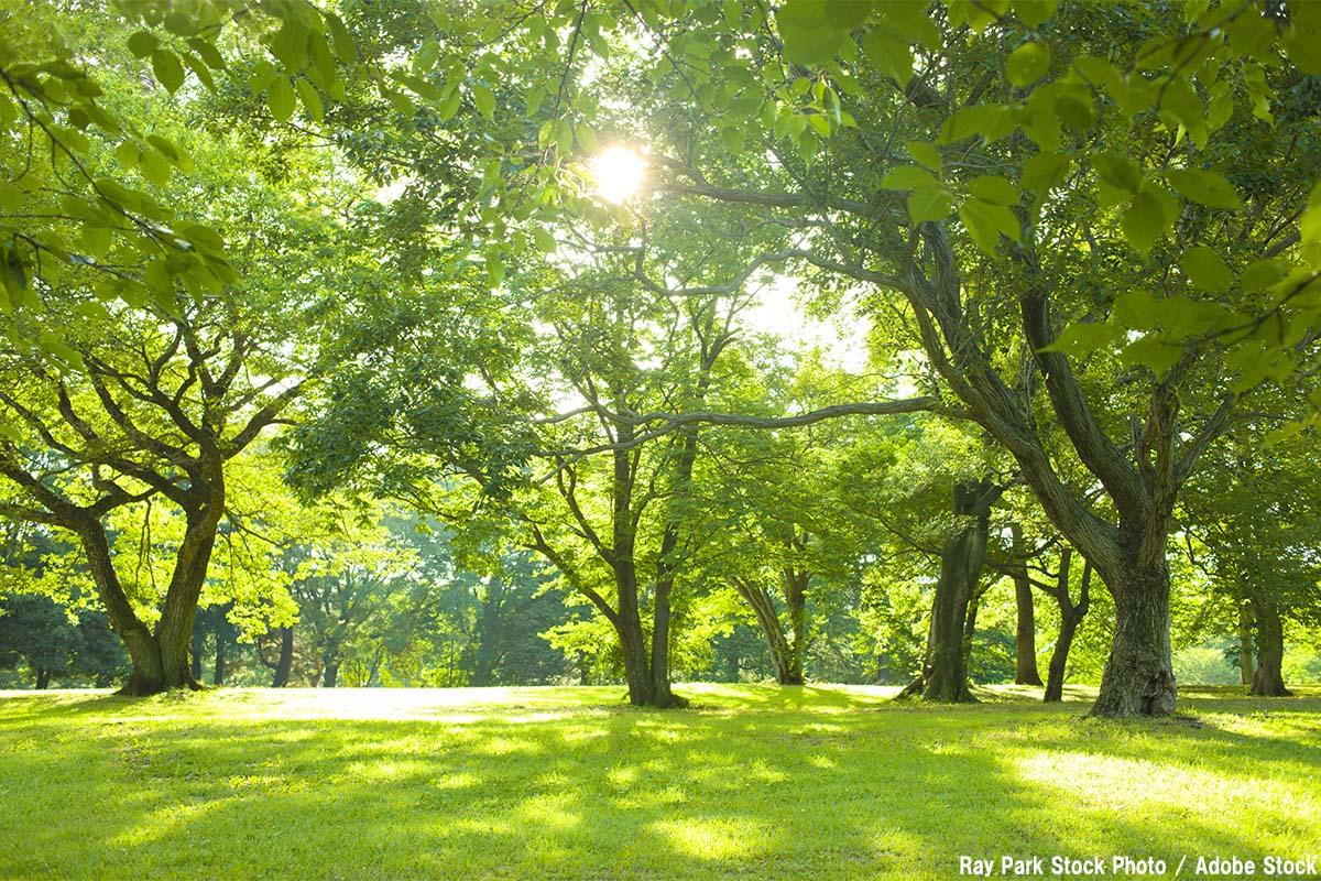 森林浴の効果と森の大気浄化能力!大河内博教授に聞く環境問題③