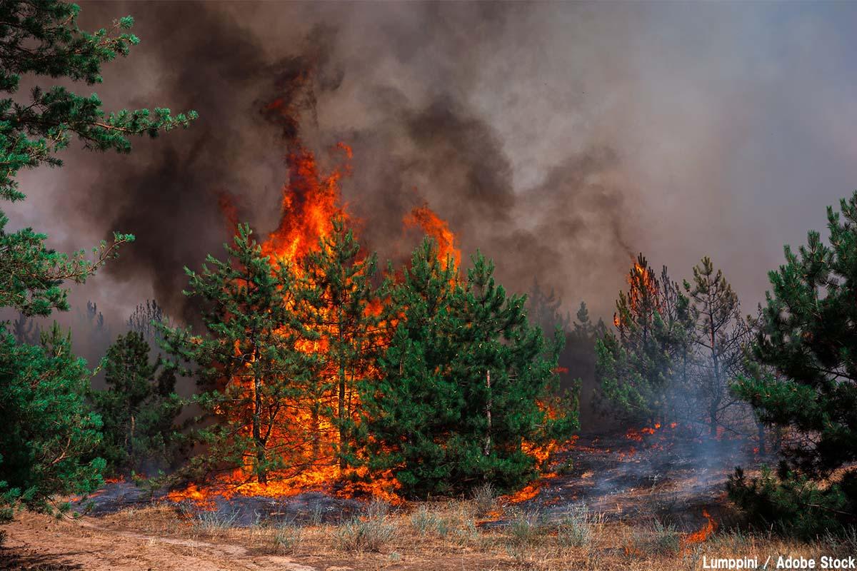 山火事・森林火災は温暖化と関係ある?事例や発生原因を解説
