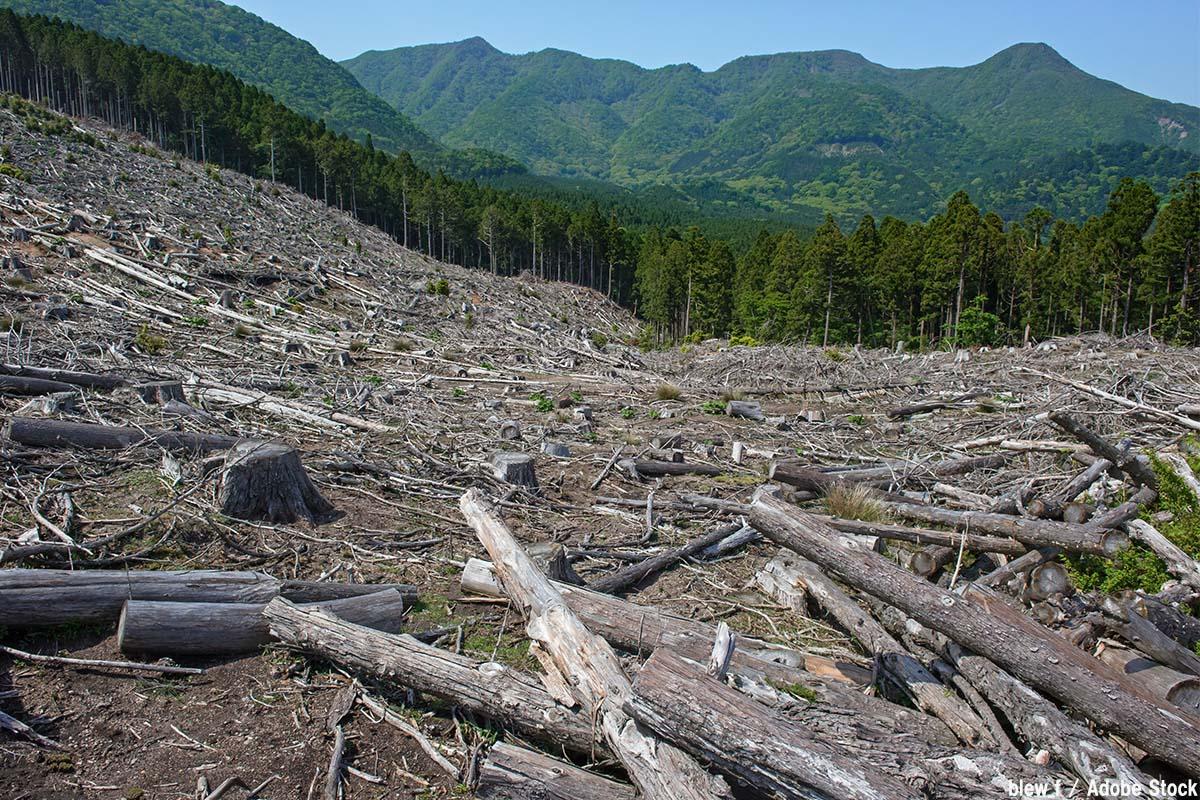 日本の森林伐採の歴史!原因・目的と環境への影響は何がある?