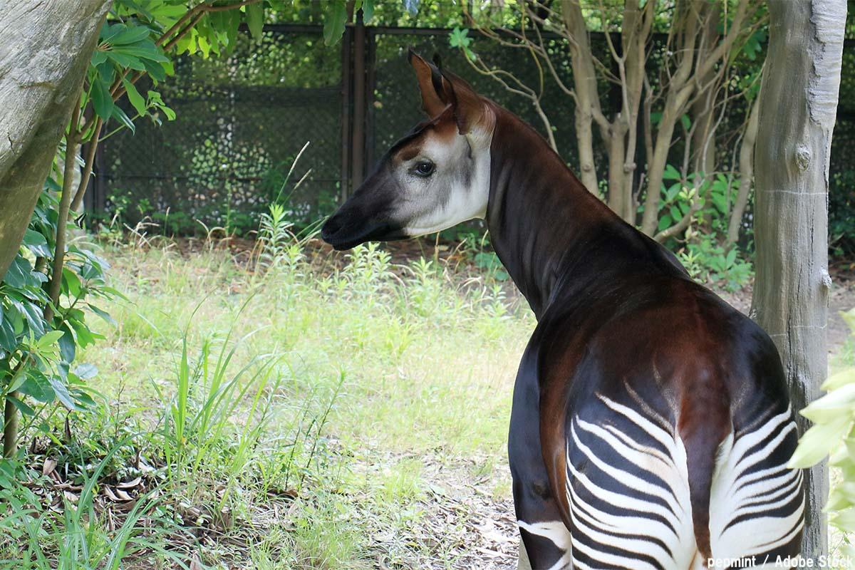 世界三大珍獣とは?不思議な動物は日本の動物園で見られる!