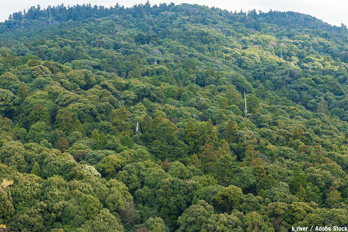 春日山原始林の原生林