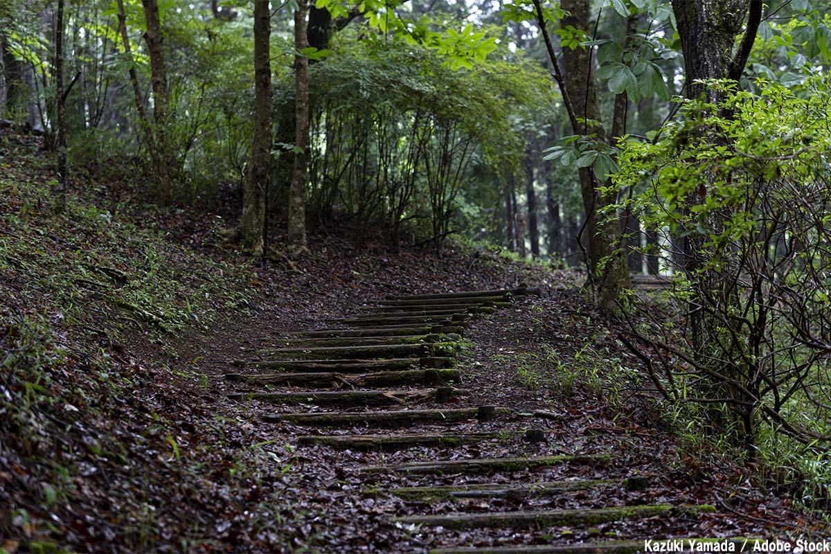 函南町の原生林