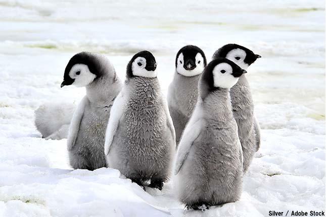 北極にペンギンはいない!南極だけに住む理由とは?