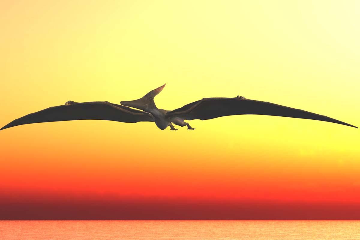 最強の恐竜候補「プテラノドン」