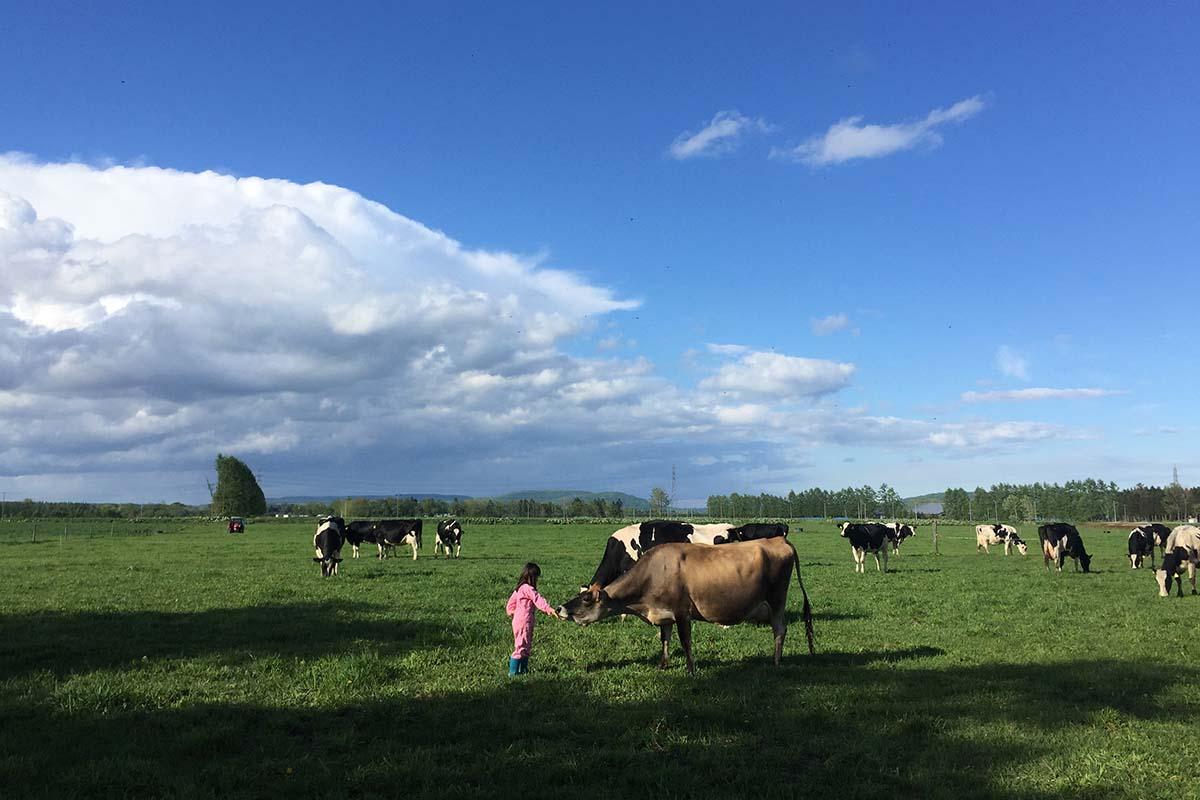 牛乳買って牛の飼育環境を改善「アニマルウェルフェア認証」とは