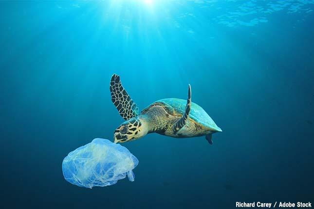 プラスチックを誤食した動物が無残なことに!海に浮かぶゴミ問題