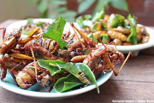 食糧難を救うのは昆虫?食べるには勇気がいる昆虫食とは