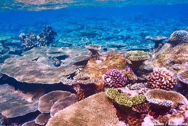 珊瑚礁とは?その役割や絶滅の原因となる白化の現象について解説!