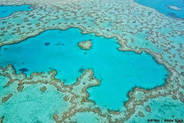 世界遺産の珊瑚礁「グレート・バリア・リーフ」が環境問題の危機に