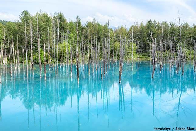 なぜ青い池は生まれたのか?北海道の美瑛にある奇跡の風景