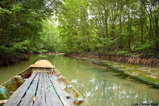 エコツアーとは?日本で自然を体験できるオススメの場所をご紹介